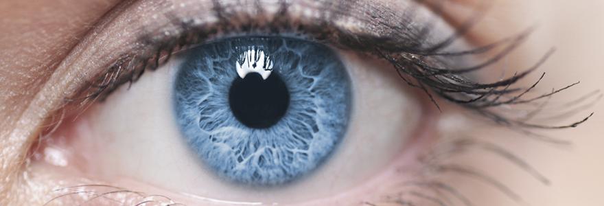 Cornée de l'oeil