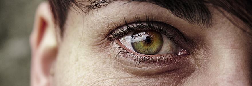 Évolution de l'oeil